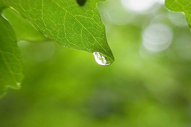 dropleave